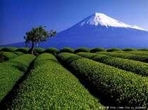 車で20分ほど走ると静岡茶と富士山に出会えるスポットがある 天候によります