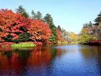 軽井沢 雲場池の紅葉