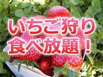 イチゴ狩り&食べ放題付きプラン