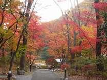 庭園・四季の森 (秋イメージ)