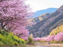 ☆花見スポット☆桜巡り☆河津桜☆伊豆の桜を見に行こう☆【二食付】