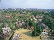 春の森の景観