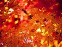 秋の紅葉シーズンにもオススメ♪駐車無料なので、車を止めたまま大阪~京都観光はいかがですか?