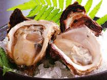 夏に旬を迎える岩牡蠣。当館の岩牡蠣は大きく濃厚な味わいをご堪能頂けます。