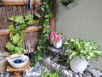 中庭の植物でほっと安らぎを