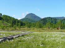 *【周辺】初夏を迎えると、ワタスゲの咲く田ノ原湿原から笠岳を望むことができます。