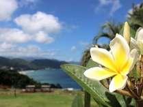 ポカポカ…南国気分☆彡 お庭からの風景です♪お庭やテラスからも碧い海が!波チェックも…