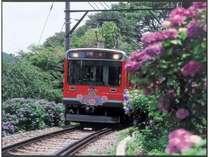 箱根登山鉄道沿線に咲き誇る『あじさい』