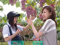 【7~10月期間限定☆ぶどう狩りプラン】日本一のぶどうの里であま~いぶどうをご堪能♪農園まで送迎付
