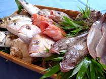 愛媛の新鮮な地魚