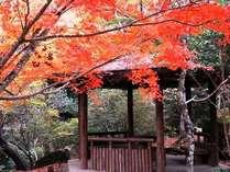 色鮮やかな紅葉の中を散策した後は、温泉でしっぽり♪