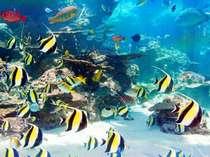 生きた珊瑚や様々な熱帯魚…美ら海水族館 ホテルからはお車で約40分 (画像提供:海洋博公園 広報企画 様)