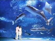 そのスケールに圧巻される美ら海水族館 ホテルからはお車で約40分(画像提供:海洋博公園 広報企画様)