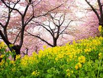 ★河津桜の並木まで宿から車で20分!みなみの桜と菜の花まつりまでは車で7分と好アクセス♪