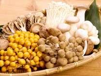 【野菜のこだわり】木の子産地・北海道。特徴ある様々な茸を、贅沢に食べ比べ