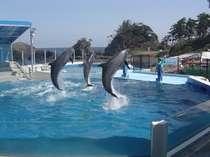 【越前松島水族館+乗馬クラフ「パ・ドゥドゥ」」】がけっぷちリゾート周遊チケット付プラン