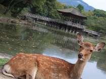 奈良・大和郡山の格安ホテル ホテルフジタ奈良