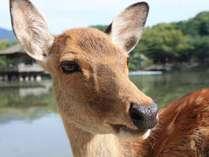 奈良公園の鹿には、なんだか癒されますね~♪