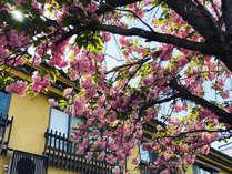 *毎年4月上旬には、客室から桜がみえることも♪