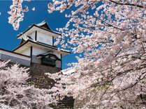 【金沢城】満開の桜に包まれた金沢城