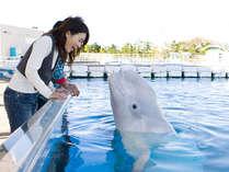 イルカにあいたい! 一日遊べるフリーパス付 横浜八景島シーパラダイスプラン