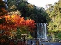 """【秋の丸尾滝】近隣温泉の温泉水を集めて流れる珍しい""""湯の滝""""。当館から徒歩約15分。"""
