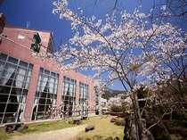 当館敷地内にある青い空に映える美しい桜☆桜を眺めながらの足湯もお楽しみいただけます。