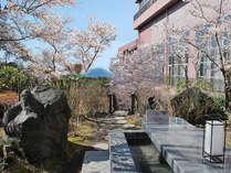 春の桜舞い散るフロントロビー前中庭のテーブル付き足湯。快晴時には桜島が望めます。