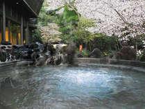 桜吹雪舞い散る露天風呂の外湯『ジャグジー付き座り湯』