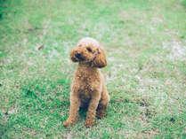 愛犬と泊まれる客室【KIRIDOG】