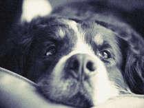 ペット(愛犬)と泊まれる宿をお探しなら露天風呂付客室のD+KRISHIMAへ