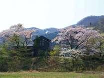 【春の鳴子御殿湯駅】駅周辺に大きな桜の木があり、レトロな駅舎とのコントラストがベストマッチ!