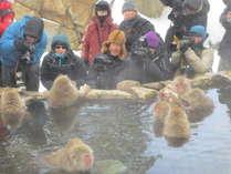Snow Monkey Park.