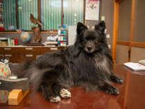*看板犬 スタッフと共に看板犬もお客様の訪問をお待ちしております。