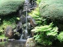 涼しさを彩る庭園の滝