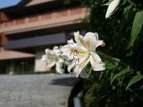 夏は仙郷楼のシンボルフラワー山百合の季節です