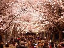 高田城百万人観桜会の花ロード