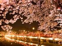 日本三大夜桜として有名な高田公園の夜桜。毎年100万人の方が訪れます。