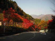 坂の上の紅葉。この坂を下ると四万温泉新湯地区。