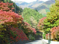紅葉の坂道。この坂を下ると新湯地区。紅葉は例年10月中旬~11月上旬