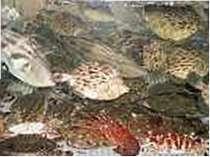 南知多の格安ホテル 旅館 魚正