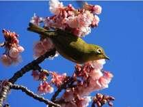 春はもうすぐ…♪河津桜までは車で40分。城ヶ崎までは車で15分
