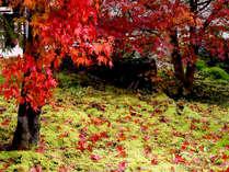 ■紅葉■秋には敷地内で素晴らしい紅葉がご覧いただけます。