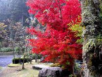 ■紅葉■秋には燃えるような紅葉がご覧いただけます♪