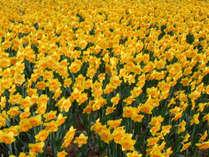 【スプリングセール】花の色香に溢れる常陸国を旅する&海辺の別邸で気持ち良く「ひとやすみ」