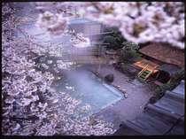 当館自慢のこの時期だけの桜見露天風呂