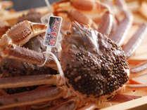 浜坂産タグ付き松葉蟹
