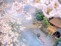 春の露天風呂-織姫