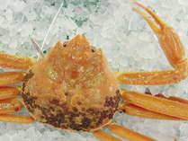 <春懐石>【至福】幻の蟹 黄金蟹 鮑 甘鯛 但馬牛を堪能する