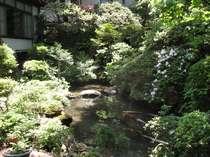 緑に囲まれたきれいな庭園